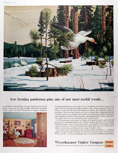 1957 Weyerhaeuser Timber Co. #014647