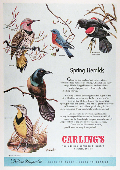 1950 Carling Brewery Songbirds Vintage CDN Ad #025852